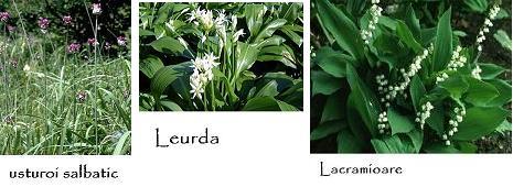 comparatie plante
